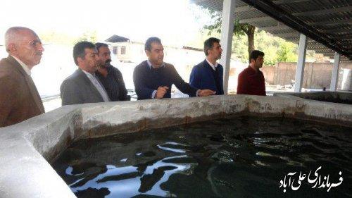 بازدید معاون فرماندار از محل احداث پرورش ماهی قزل آلا