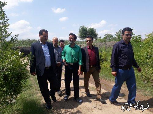 بازدید فرماندار علی آباد کتول از گلخانه صنعتی هیدروپونیک
