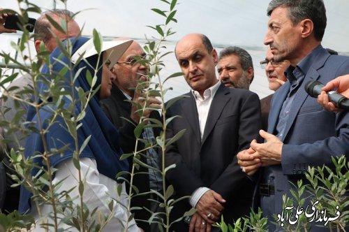 بازدید رییس بنیاد مستضعفان کشور و استاندار گلستان از گلخانه تولید نهال زیتون در علی آبادکتول