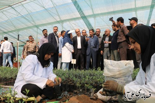 بازدید رییس بنیاد مستضعفان کشور و دکتر حق شناس استاندار از گلخانه تولید نهال زیتون در علی آبادکتول
