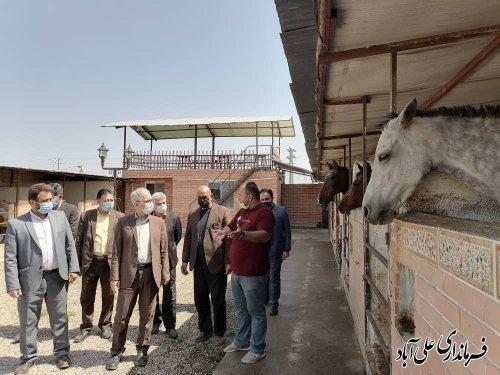 بازدید فرماندار از مزرعه پرورش اسب آناهورس علی آبادکتول