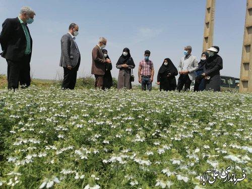 در سال زراعی جاری ۱۷۵هکتار از اراضی شهرستان تحت کشت گیاهان دارویی قرار دارد