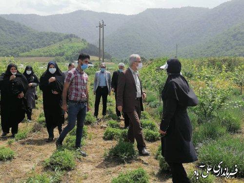 در سال زراعی جاری ،۱۷۵هکتار از اراضی شهرستان ، تحت کشت گیاهان دارویی قرار دارد ؛