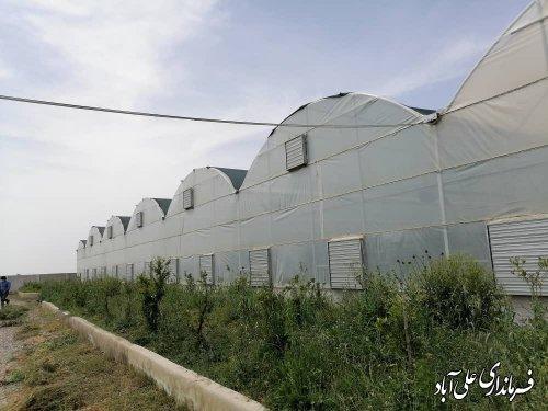 بازدید فرماندار علی آباد کتول از گلخانه هیدروپونیک تولید صیفی جات در روستای باقرآباد