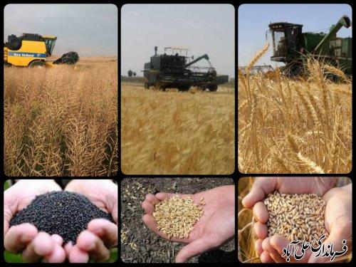 ۱۱۵۰۰ تن محصولات کشاورزی (گندم ، کلزا) برداشت و به ۱۲ مرکز خرید در سطح شهرستان علی آبادکتول تحویل شده است ؛